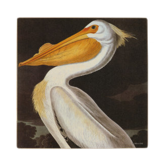 Audubon: Great White Pelican Wood Coaster