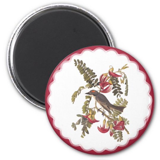 Audubon Grey Tyrant Bird Vintage Bookplate Art Magnet