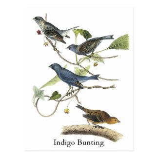 Audubon Indigo Bunting Print Post Cards