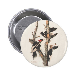 Audubon Ivory-Billed Woodpecker 6 Cm Round Badge