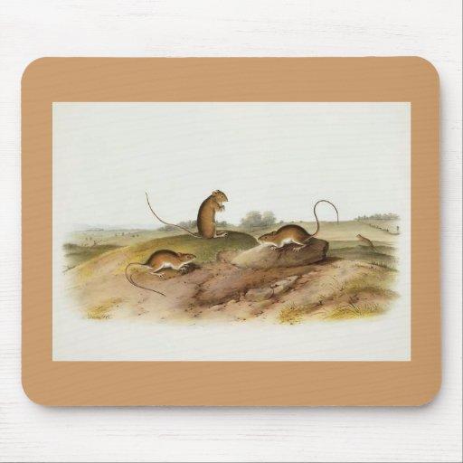Audubon - Jumping Mouse Mouse Pad