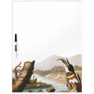 Audubon Kingfisher Bird Wildlife Dry Erase Board