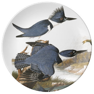 Audubon Kingfisher Birds Wildlife Porcelain Plate