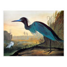 Audubon: Little Blue Heron Postcard