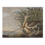 Audubon Long-Billed Curlew Sandpiper Bird Postcard