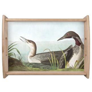 Audubon Loon Birds Wildlife Animals Serving Tray