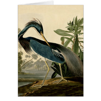 Audubon Louisiana Heron Card