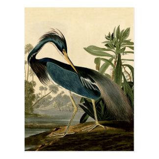 Audubon Louisiana Heron Postcard
