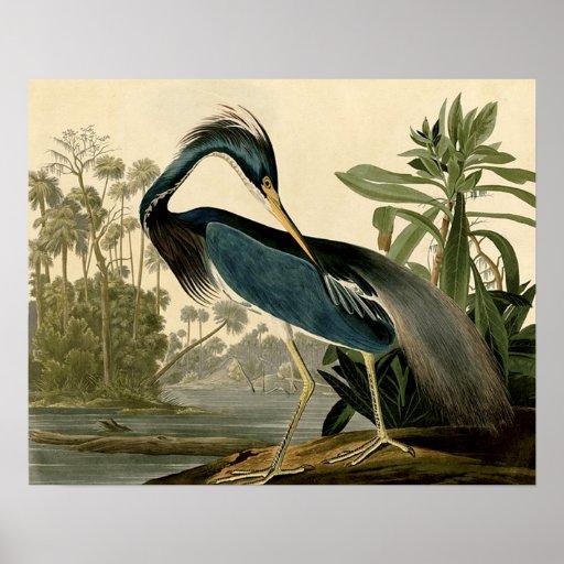 Audubon Louisiana Heron Print