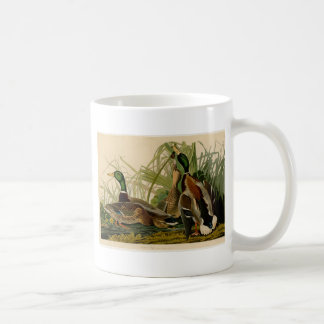 Audubon Mallard duck Bird Vintage Print Coffee Mug
