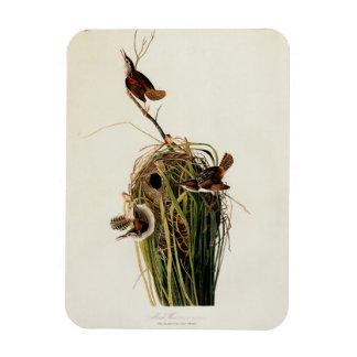 Audubon Marsh wren Vintage Bird Print Rectangular Magnet