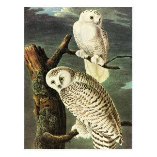 Audubon Owls Postcard