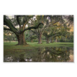 Audubon Park Rain Art Photo