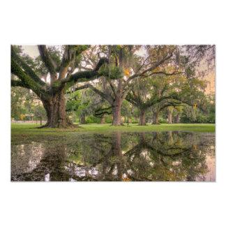 Audubon Park Rain Photo Art