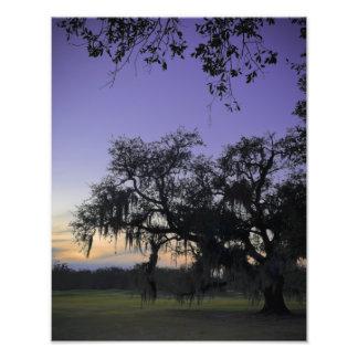 Audubon Park Sunset Photo Art