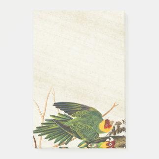 Audubon Parrot Birds Wildlife Post It Notes