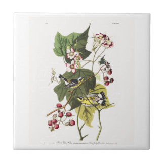Audubon Plate 123 Black and Yellow Warblers Small Square Tile