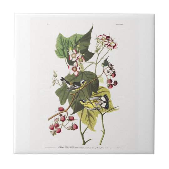 Audubon Plate 123 Black and Yellow Warblers Small