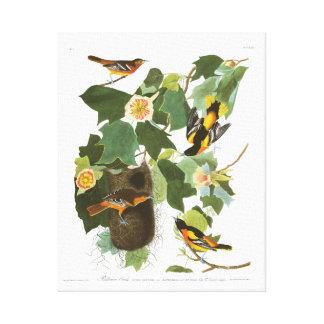 Audubon Plate 12 Baltimore Oriole Canvas Print