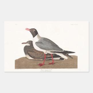 Audubon Plate 314 Black-Headed Gull Rectangular Sticker