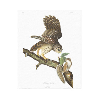 Audubon Plate 46 Barred Owl Gallery Wrapped Canvas