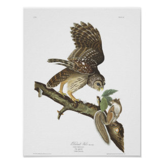 Audubon Plate 46 Barred Owl Poster
