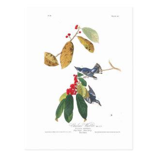 Audubon Plate 48 Azure Cerulean Warbler Postcard