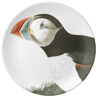 Audubon Puffin Bird Wildlife Porcelain Plate