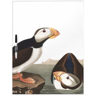 Audubon Puffin Birds Wildlife Dry Erase Board