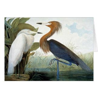 Audubon: Reddish Egret Or Purple Heron Card