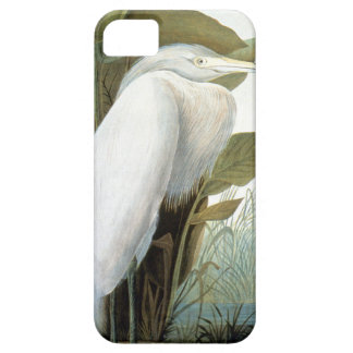 Audubon: Reddish Egret Or Purple Heron iPhone 5 Cases