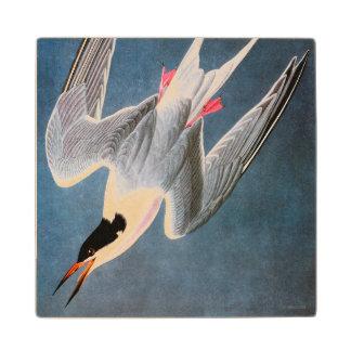 Audubon: Roseate Tern Wood Coaster