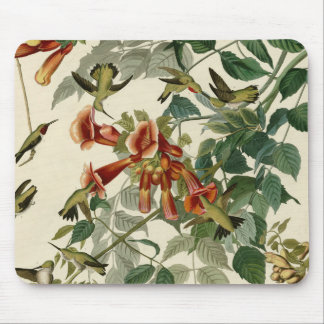 Audubon Ruby Throated Hummingbirds Mouse Mat