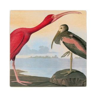 Audubon: Scarlet Ibis Wood Coaster