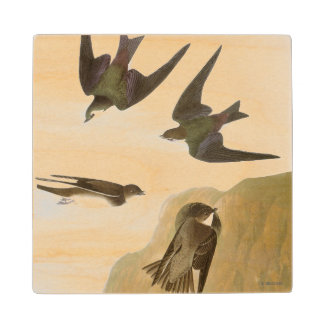 Audubon: Swallows Wood Coaster