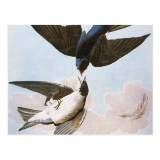 Audubon: Tree Swallow Postcard