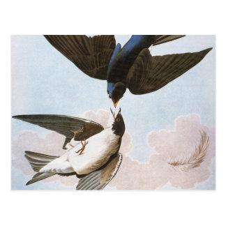 Audubon: Tree Swallow Postcard