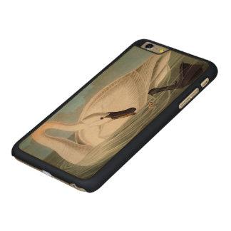 Audubon: Trumpeter Swan Carved Maple iPhone 6 Plus Case