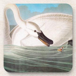 Audubon: Trumpeter Swan Coaster