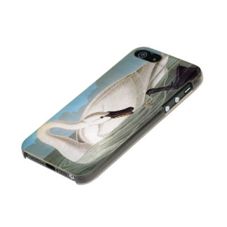 Audubon: Trumpeter Swan Incipio Feather® Shine iPhone 5 Case