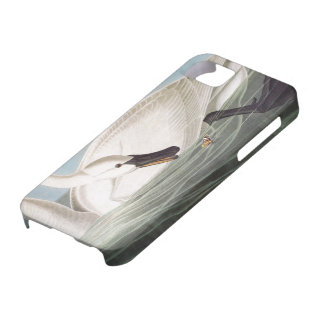 Audubon: Trumpeter Swan iPhone 5 Cover