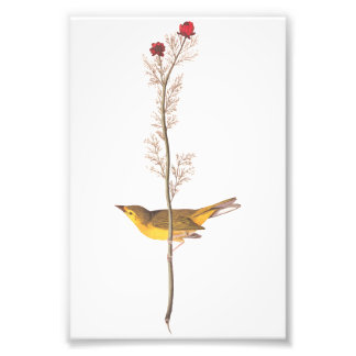 Audubon Vintage Art Selby's Flycatcher Bird Photograph