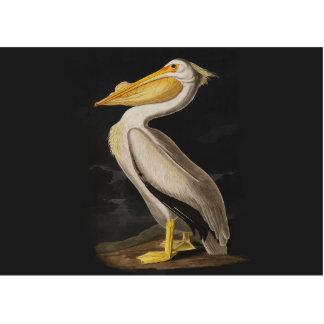 Audubon White Pelican Bird Vintage Print Photo Cut Out