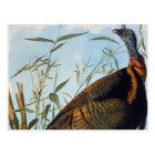 Audubon: Wild Turkey Postcard