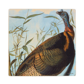 Audubon: Wild Turkey Wood Coaster