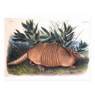 Audubon's Armadillo Post Card