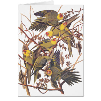 Audubon's Carolina Parakeet Card