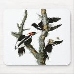 Audubon's Ivory-billed Woodpecker Mousemat
