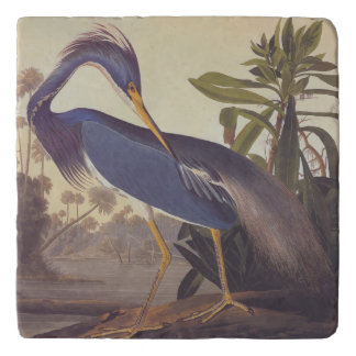 Audubon's Louisiana Heron or Tricolored Heron Trivet