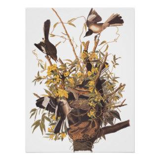 Audubon's Mockingbird family poster